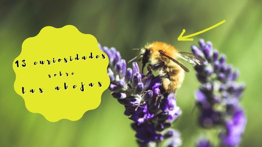 13 curiosidades sobre las abejas