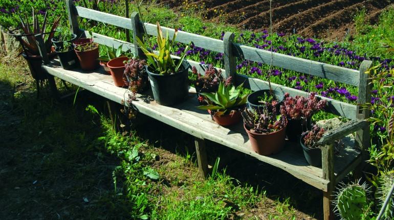 Plantas del agroturismo Can Martí