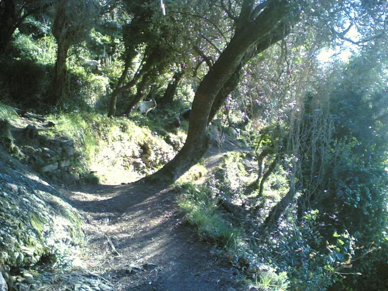 Camino Camogli-San Fruttuoso