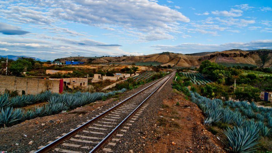 tren Tequila, paisaje plantas de agaves