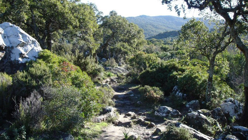 Parque Natural Los Alcornocáles