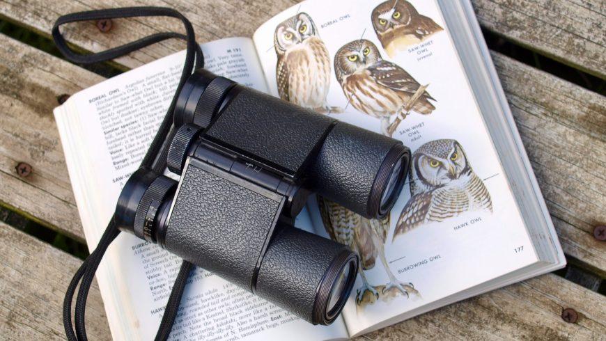 Observación de aves-Guía para observación de aves