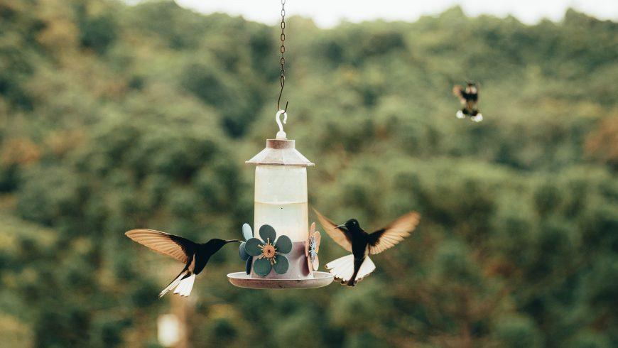 Trae los pájaros-