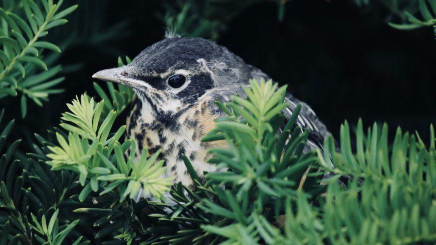 leer- Observación de aves
