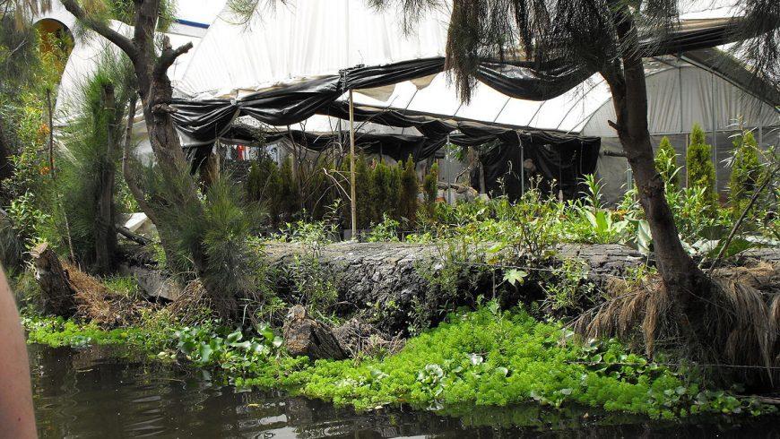 Laguna de Xochimilco